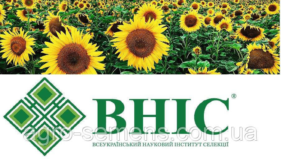 Семена подсолнуха Украинский F1 ВНИС