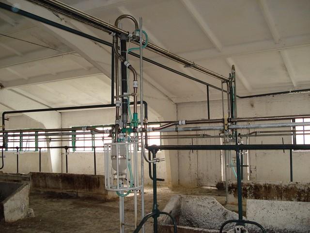 Молокопровод 100 голов для ферм с привязным содержанием
