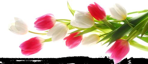 Что подарить на 8 Марта: недорогие, но душевные подарки
