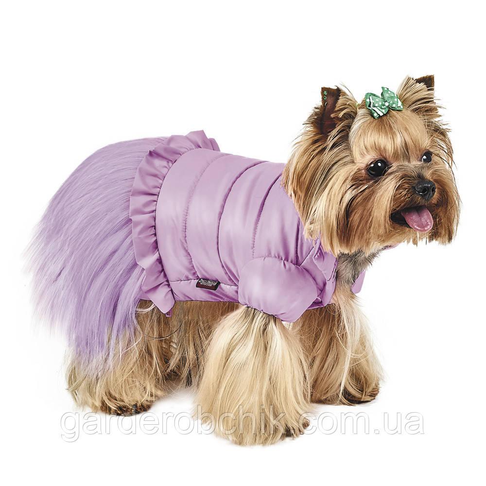 """Куртка, жакет для собаки  """"Франческа"""" Pet Fashion. Одежда для собаки"""