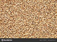 "Семена овса ""Мустанг"""