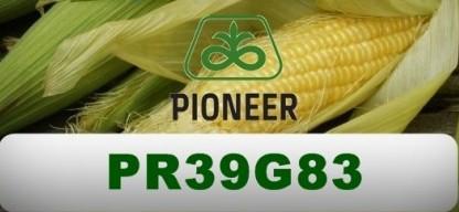 Семена кукурузы Пионер/Pioneer PR39G83