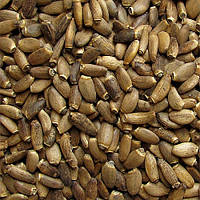 Расторопши пятнистой семена 1 кг, лекарственные, пищевые, урожай 2019 года