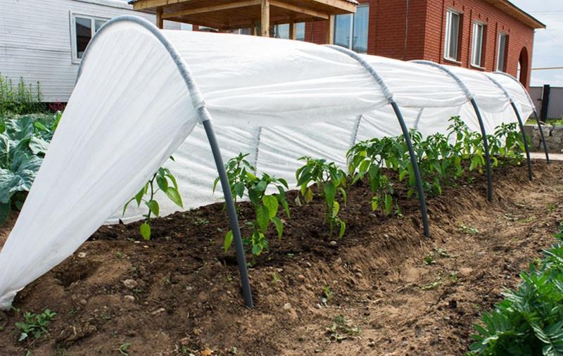 Парник мини-теплица из агроволокна 8 м (плотность 42 гр м/кв)