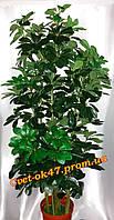 Искусственное дерево Шефлера бол.зелёная