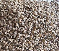 Семена Экспарцета