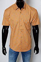 9ec44352483 Мужская Рубашка Gucci — Купить Недорого у Проверенных Продавцов на ...