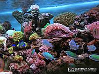 Создание морских аквариумов. Проект, изготовление, запуск, обслуживание. Реанимация и перезапуск.