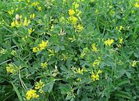 Семена трава для засевания Люцерна 1 КГ