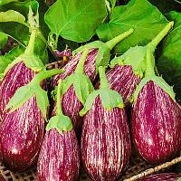 Рико F1 - семена баклажана, Lark Seeds 100 семян