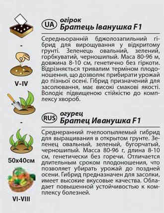 """Насіння огірка середньораннього, для відкритого грунту """"Братик Іванко"""" F1 (0,5 г) від Agromaksi seeds, фото 2"""