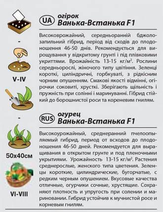 """Семена огурца урожайного, среднераннего """"Ванька-Встанька"""" F1 (0,5 г) от Agromaksi seeds, фото 2"""