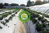 Агроволокно Черно-Белое AGREEN 1,60*50м 3отв в ряд. 50г\м.кв с перфорацией - 4сезона, фото 5