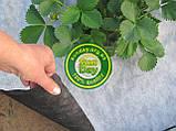 Агроволокно Черно-Белое AGREEN 1,60*50м 3отв в ряд. 50г\м.кв с перфорацией - 4сезона, фото 8