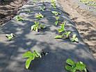 Агроволокно Agreen 50 черное (1,6 х 100 м), фото 2