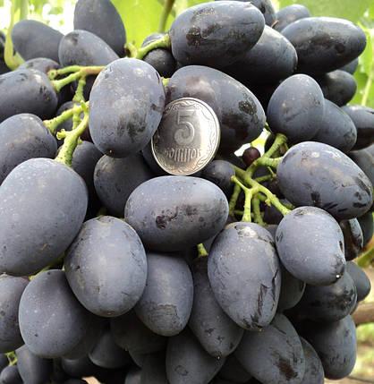 Виноград Надежда Азос, фото 2