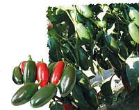 Семена горького перца 1851 F1, Lark Seeds 500 семян | профессиональные, фото 1