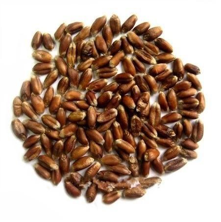 Пшеница чернозерная органическая