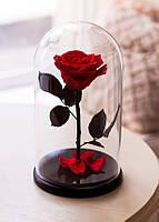 Роза под колбой Красная