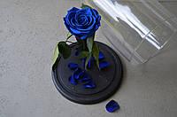 Роза под колбой Синяя