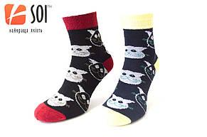 Шкарпетки спортивні жіночі SOI 23-25 р. (36-40) * 635 / котики, фото 2