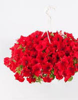 Surfinia Red Trailing