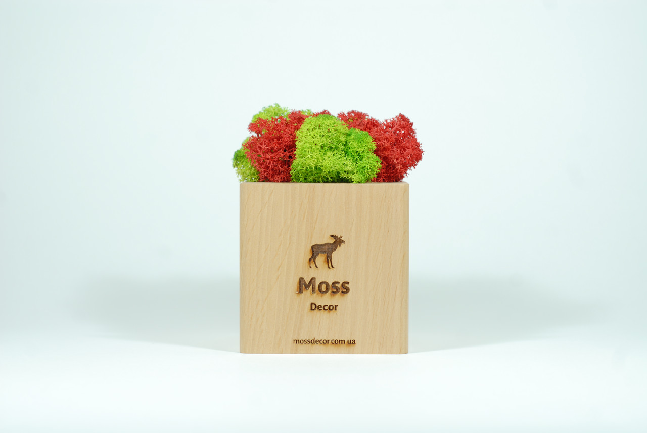 Подставка со стабилизированным мхом для телефона Moss Cube 2.0