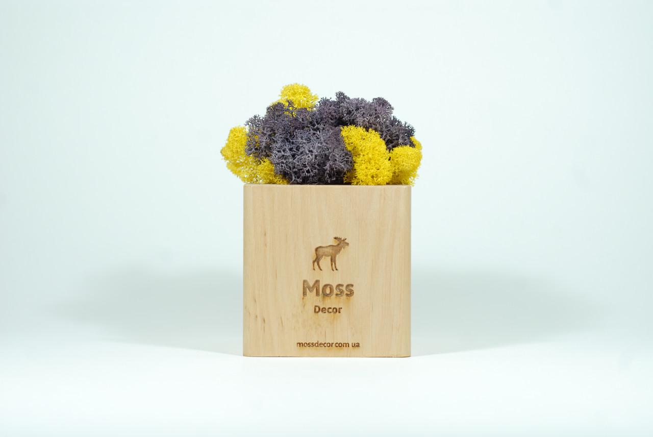 Подставка со стабилизированным мхом для смартфона Moss Cube 2.0