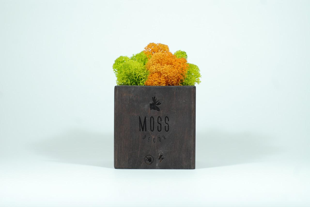 Moss Cube 2.0. Подставка со стабилизированным мхом для смартфона