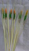 Колоски пшеницы (6/5) (цена за 1 шт. + 1 гр.)
