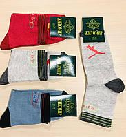 Носки женские демисезонные спортивные хлопок  Житомир ТМ PREMIUM размер 35-41