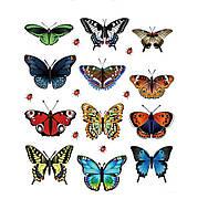 Наклейки Бабочки Радуга 12шт.