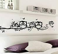 """Наклейка на стену """"Семейка Совушек на ветке"""", цвет черный, фото 1"""