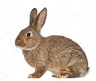 Комбікорм для кролів віком від 61 днів