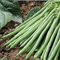 Семена спаржевой фасоли Крокет, Clause 5 000 семян | профессиональные