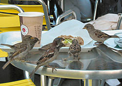 Отпугиватели птиц, животных, грызунов