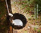 Резиновые петли для фитнеса / Резина для подтягивания U-Powex Комплект 4шт+ Сумочка !!!, фото 7
