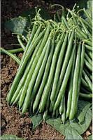 Кустовая высокоурожайнвя спаржевой фасоли сорт Пайк, профессиональные семена для фермеров Clause 5 000 семян