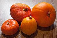 Семена Тыквы сорт Стофунтовая ТМ Агролиния 0,5 кг