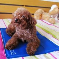 Охлаждающий коврик для собак Marukan (Япония), Ch Man 90х50см