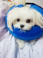 Воротник для собаки надувной