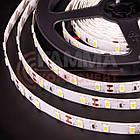 Светодиодная лента SMD 3528 (60 LED/м), белый, IP65, 12В  бобины от 5 метров, фото 3