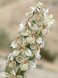 Шелуха семян подорожника Isabgol 100г (quality-grade) Индия, фото 2