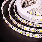 Светодиодная лента MOTOKO PREMIUM SMD 5050 (60 LED/м), теплый белый, IP20, 12В - бобины от 5 метров, фото 3