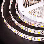 Светодиодная лента MOTOKO PREMIUM SMD 5050 (60 LED/м), белый, IP20, 12В - бобины от 5 метров, фото 3