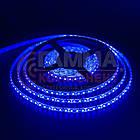 Світлодіодна стрічка SMD 2835 (120 LED/м), синій, IP20, 12В, бобіни від 5 метрів, фото 2