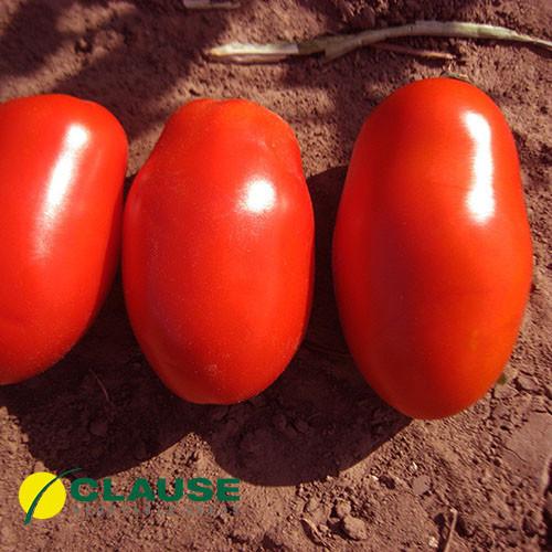 Семена томата Тенорио F1, Clause 5 000 семян | профессиональные