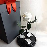 Роза под колбой Белая