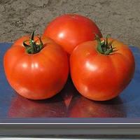 Семена томата Альянс F1, Clause 250 семян | профессиональные