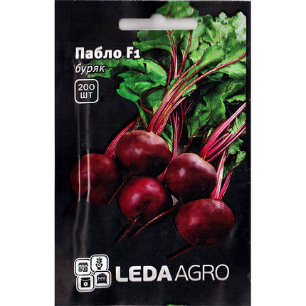 """Семена свеклы урожайной, столовой """"Пабло"""" (200 семян) от Bejo, Голландия, фото 2"""